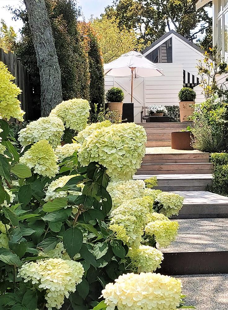 Remuera garden designer